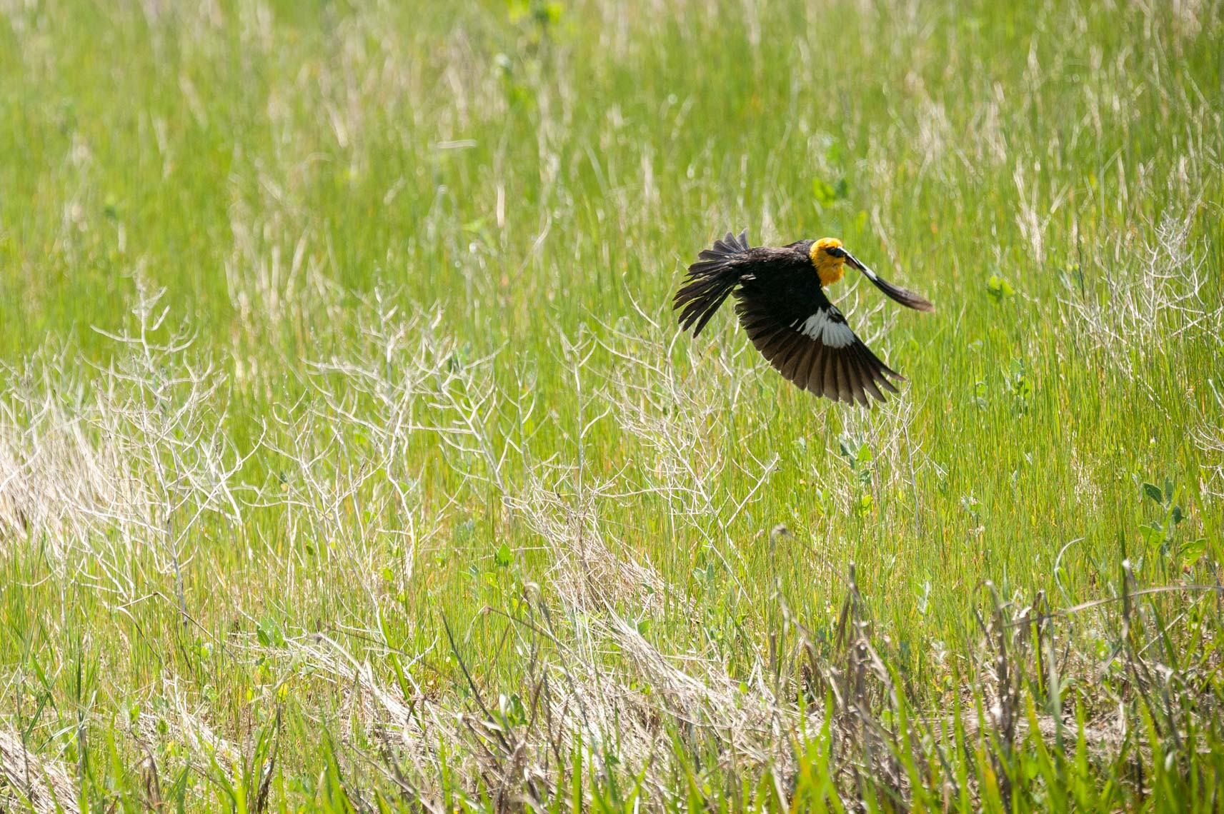 Montana Wildlife Bird Editorial Photograph 09