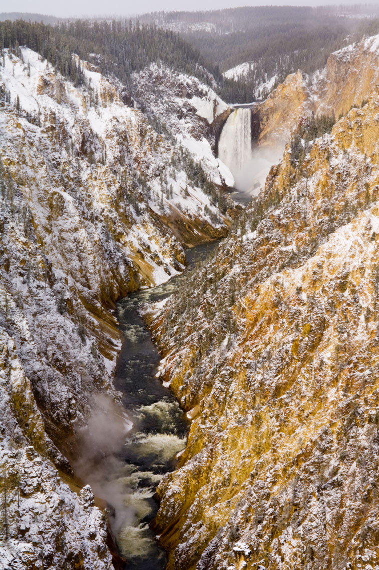 Yellowstone Photographer Thomas Lee -Landscape Wildlife 05