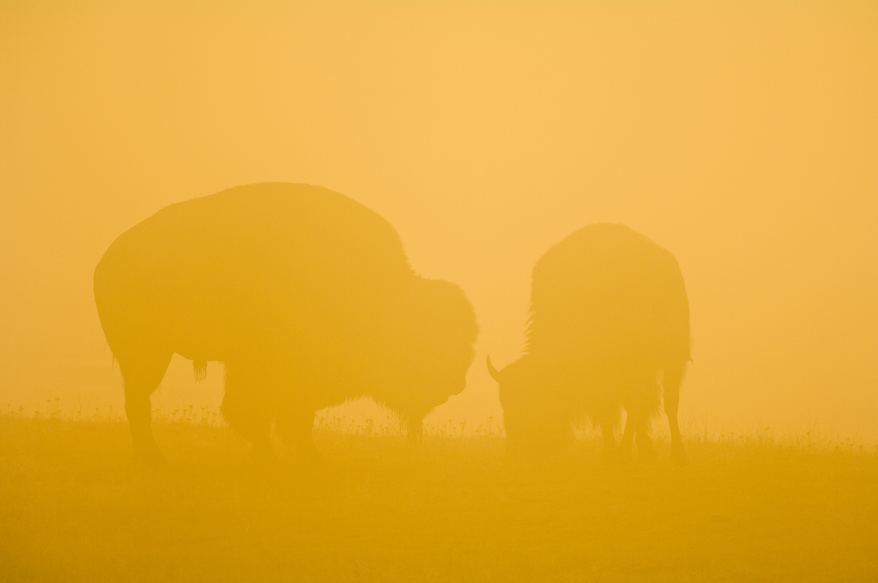 Yellowstone Photographer Thomas Lee - Landscape Wildlife 21