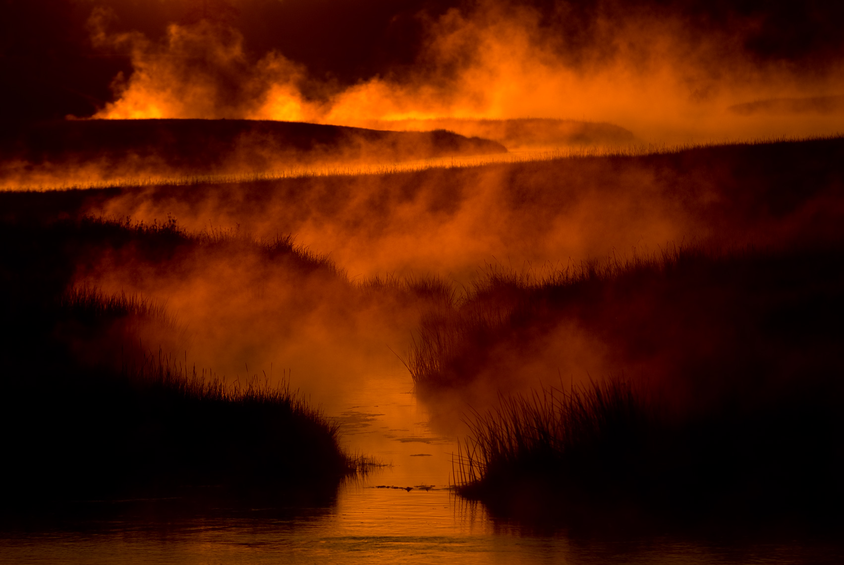 Yellowstone Photographer Thomas Lee - Landscape Wildlife 23